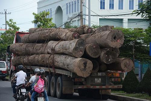 Xử phạt hai xe rơ – moóc chở gỗ quá tải - ảnh 1