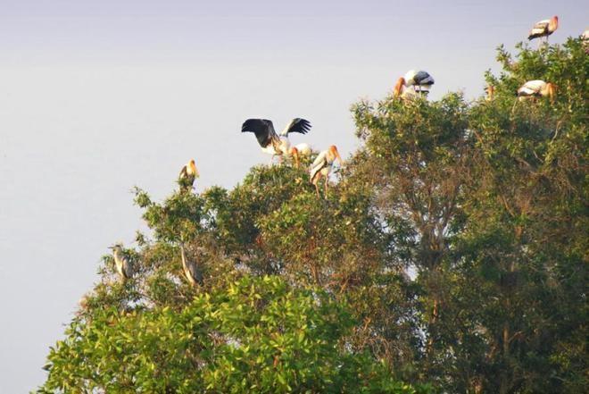Tràm Chim, thiên đường mùa nước nổi - ảnh 10