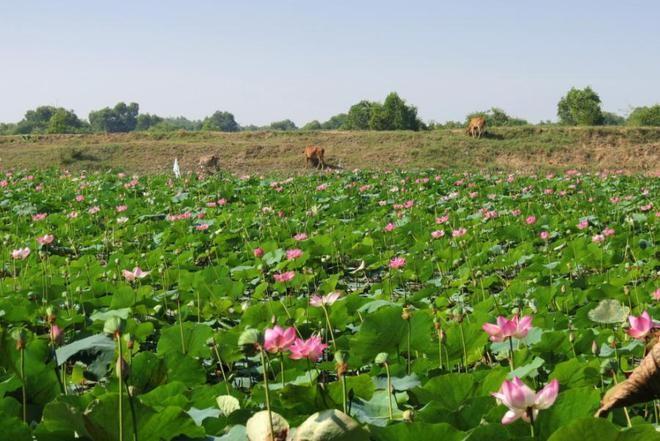 Tràm Chim, thiên đường mùa nước nổi - ảnh 12