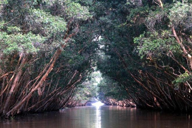 Tràm Chim, thiên đường mùa nước nổi - ảnh 7