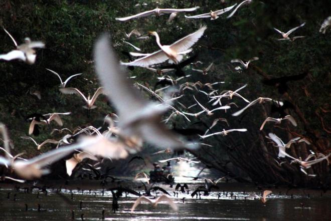 Tràm Chim, thiên đường mùa nước nổi - ảnh 8