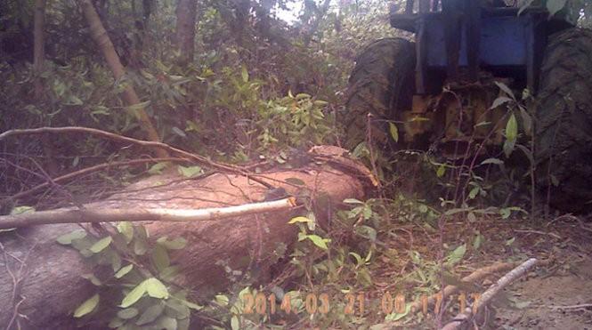 Bí mật ghi hình lâm tặc phá rừng - ảnh 1
