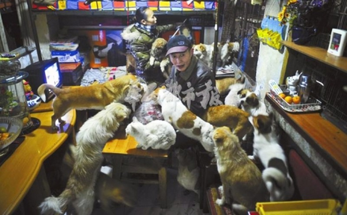 Đôi vợ chồng sống cùng 60 con chó  và  mèo hoang trong 10 năm - ảnh 1