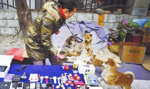 Đôi vợ chồng sống cùng 60 con chó  và  mèo hoang trong 10 năm - ảnh 2