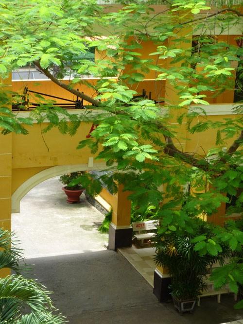 THPT Trưng Vương - ngôi trường cổ kính đầy thơ mộng - ảnh 3