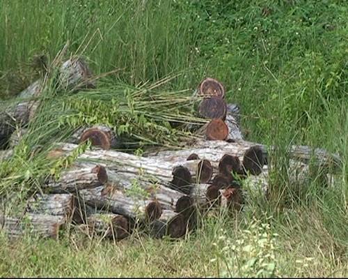 Phát hiện hơn 20 mét khối gỗ lậu tập kết bên quốc lộ 14 - ảnh 3