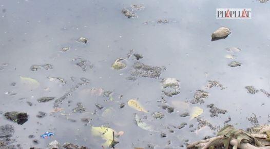 Sẽ di dời trại heo gây ô nhiễm ở huyện Bình Chánh - ảnh 3