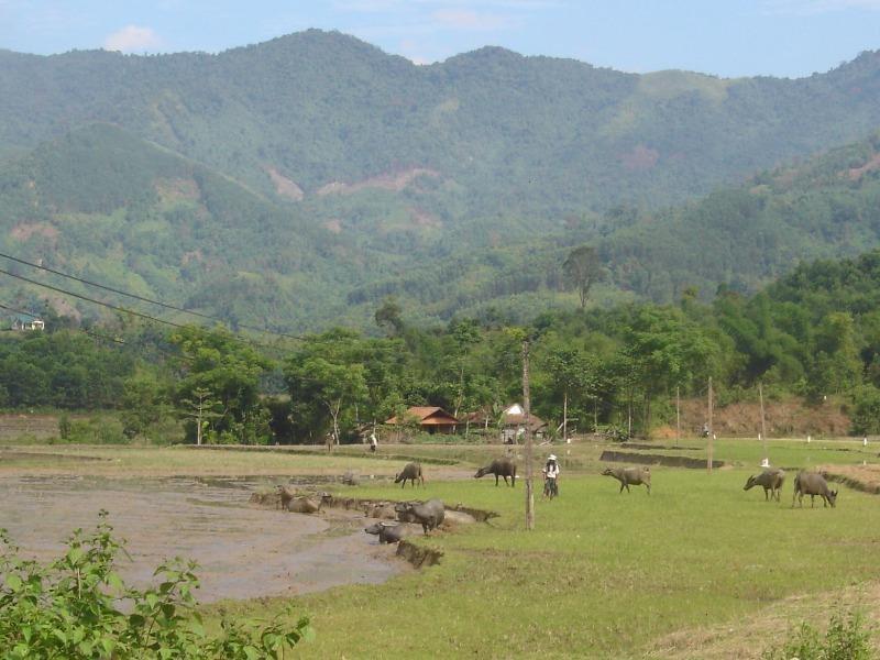 Đầu năm 2017 'làng bệnh lạ' ở Quảng Ngãi có điện đường  - ảnh 1