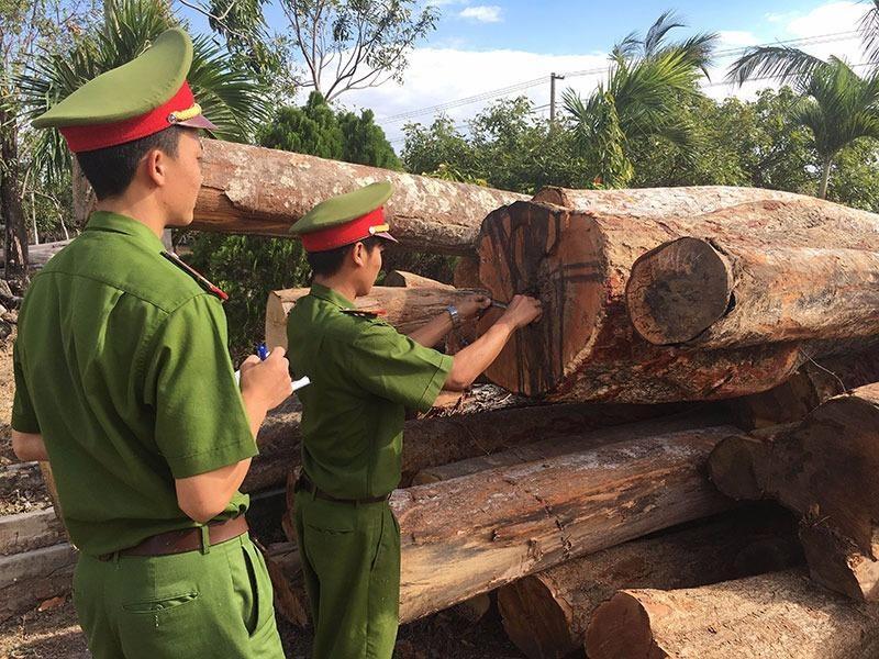 Xưởng chế biến gỗ không phép nằm sát bìa rừng - ảnh 1