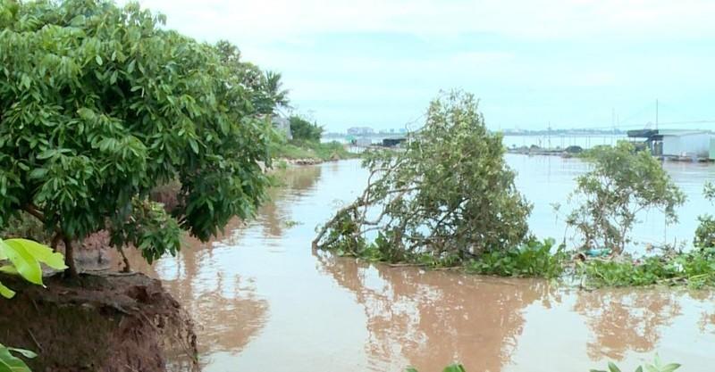 Liên tiếp sạt lở khu vực giáp sông Tiền - ảnh 1