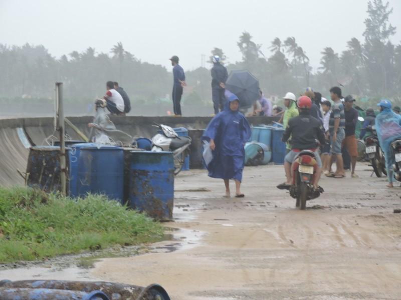 Ngư dân Lý Sơn thiệt hại 45 tỉ vì bão số 12   - ảnh 3