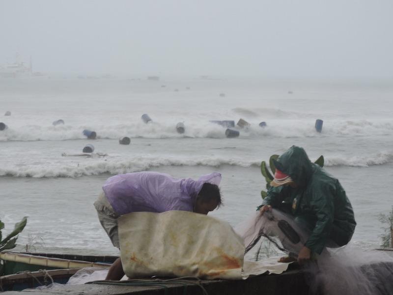 Ngư dân Lý Sơn thiệt hại 45 tỉ vì bão số 12   - ảnh 2