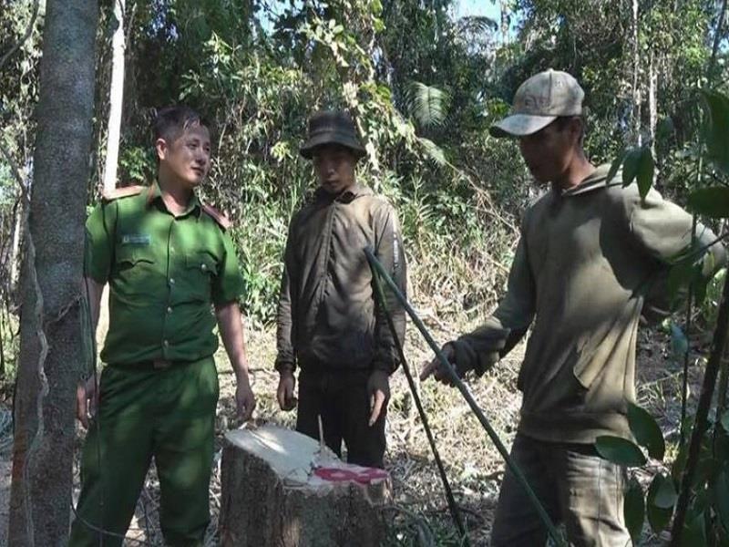 Khai thác hàng chục mét khối gỗ, bốn người bị bắt - ảnh 1