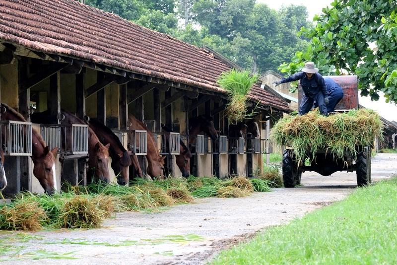 Chiêm ngưỡng đàn ngựa cứu người ở trại Suối Dầu  - ảnh 4