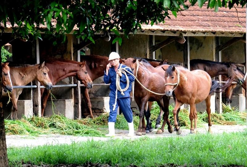 Chiêm ngưỡng đàn ngựa cứu người ở trại Suối Dầu  - ảnh 3
