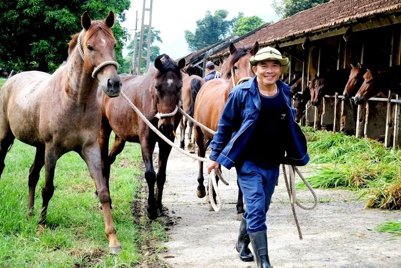 Chiêm ngưỡng đàn ngựa cứu người ở trại Suối Dầu  - ảnh 2