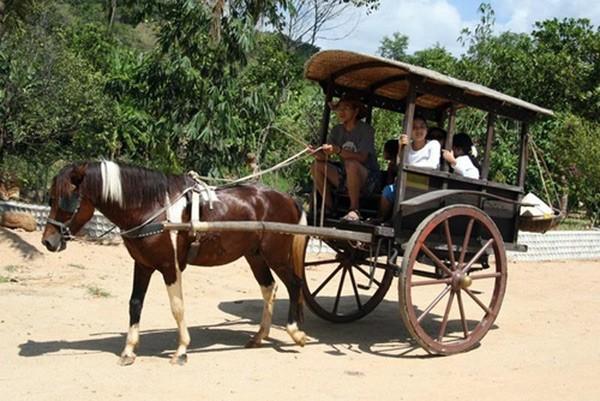 Nhắc đến xe ngựa là bụng dạ cồn cào nao nao… nhớ - ảnh 2