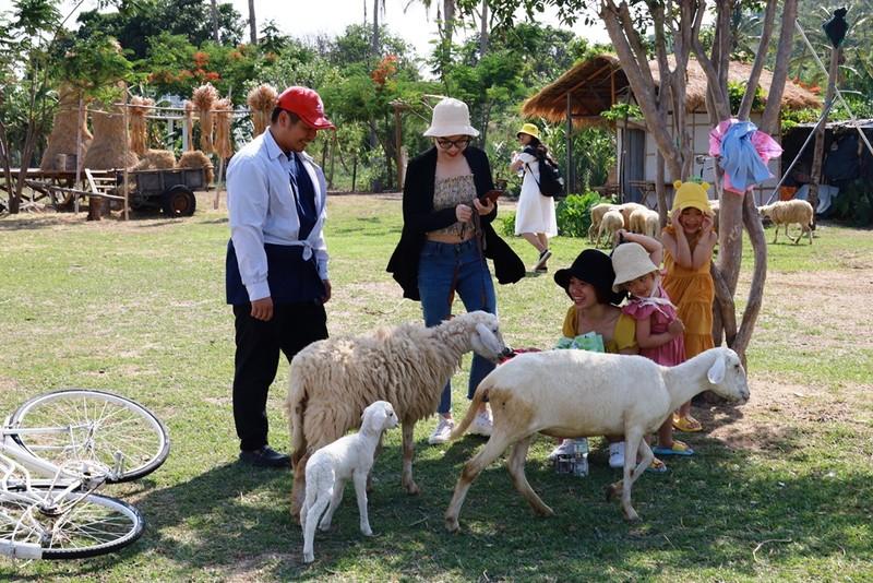 Thích thú với đồng cừu thân thiện ở Suối Tiên Cam Ranh - ảnh 10