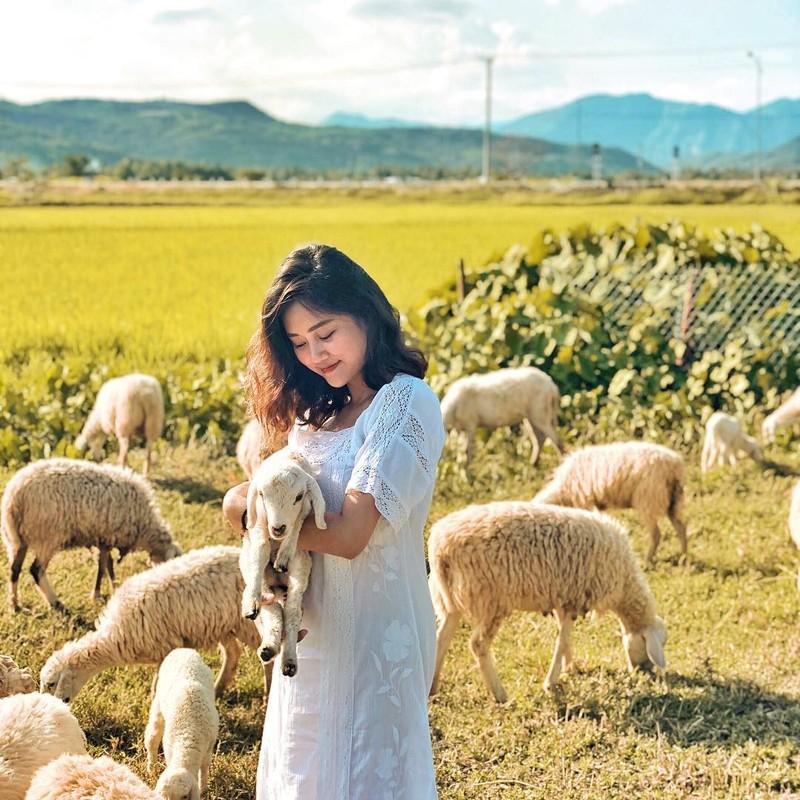 Thích thú với đồng cừu thân thiện ở Suối Tiên Cam Ranh - ảnh 9