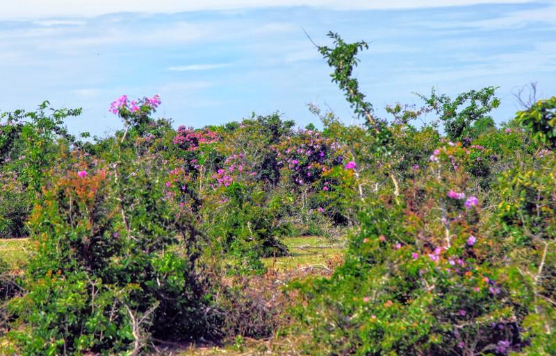 Ngắm rừng bằng lăng tím khoe sắc, bên cánh đồng muối Cà Ná - ảnh 7