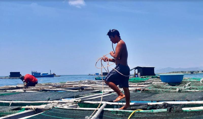 Về Ninh Thuận ra làng bè Đông Hải xem tắm cá - ảnh 4