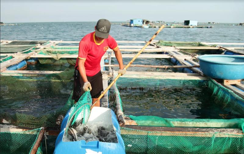 Về Ninh Thuận ra làng bè Đông Hải xem tắm cá - ảnh 14