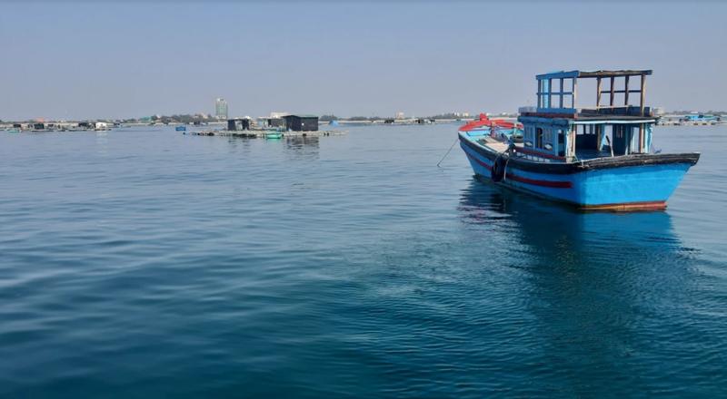 Về Ninh Thuận ra làng bè Đông Hải xem tắm cá - ảnh 5
