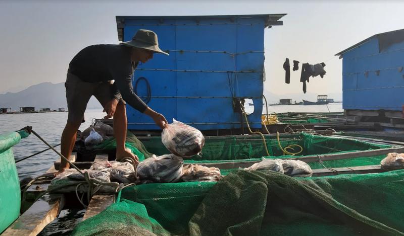 Về Ninh Thuận ra làng bè Đông Hải xem tắm cá - ảnh 9
