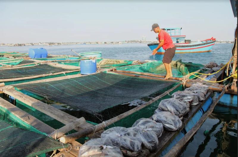 Về Ninh Thuận ra làng bè Đông Hải xem tắm cá - ảnh 10