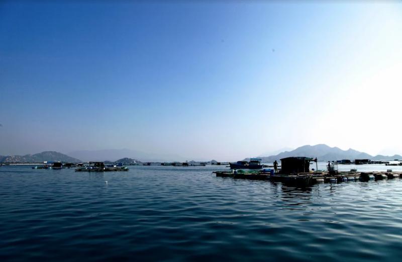 Về Ninh Thuận ra làng bè Đông Hải xem tắm cá - ảnh 7
