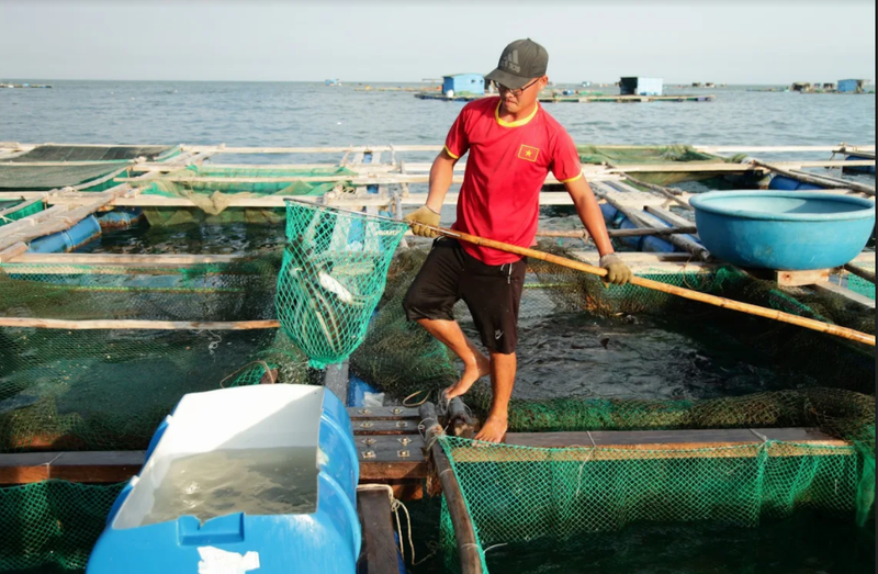 Về Ninh Thuận ra làng bè Đông Hải xem tắm cá - ảnh 12
