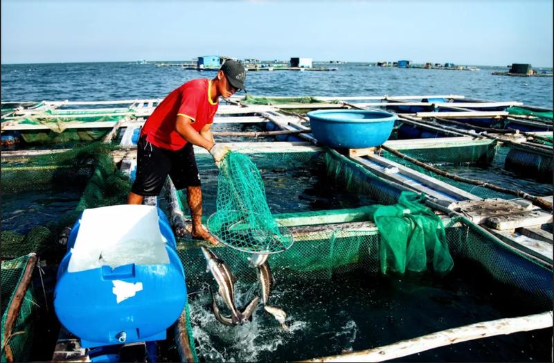 Về Ninh Thuận ra làng bè Đông Hải xem tắm cá - ảnh 13