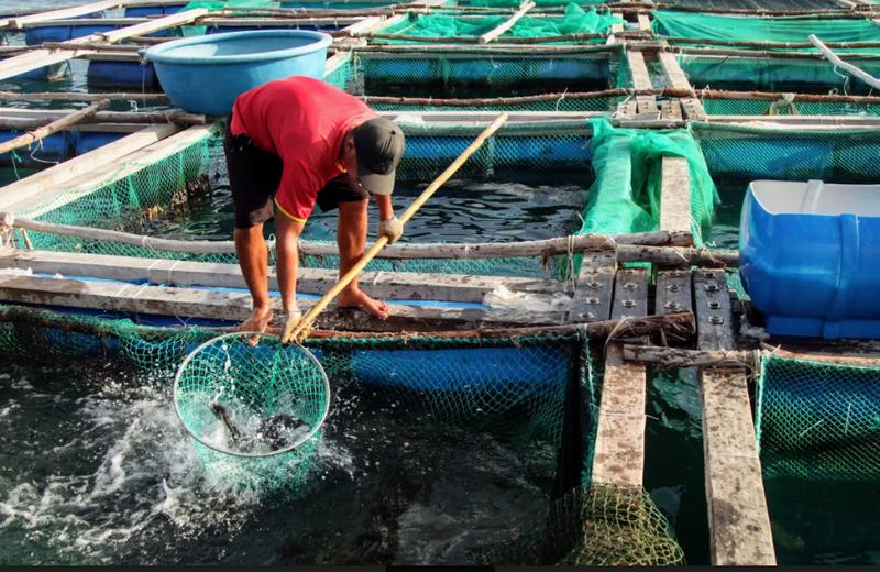 Về Ninh Thuận ra làng bè Đông Hải xem tắm cá - ảnh 3