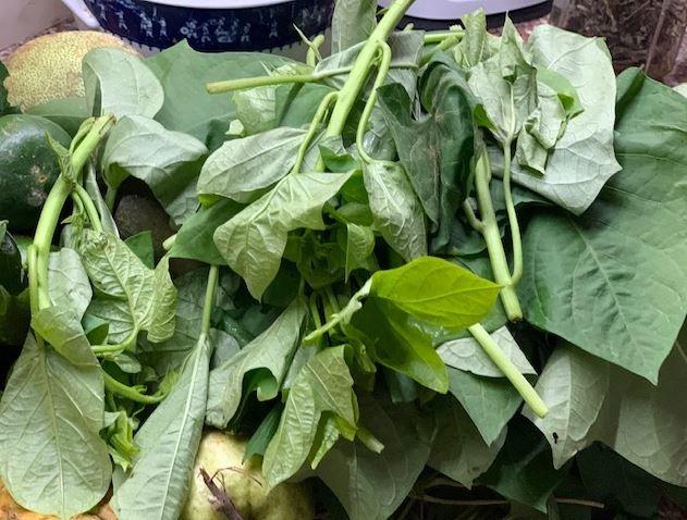 Người xứ Quảng có món rau lang kho mắm cái đặc biệt - ảnh 6
