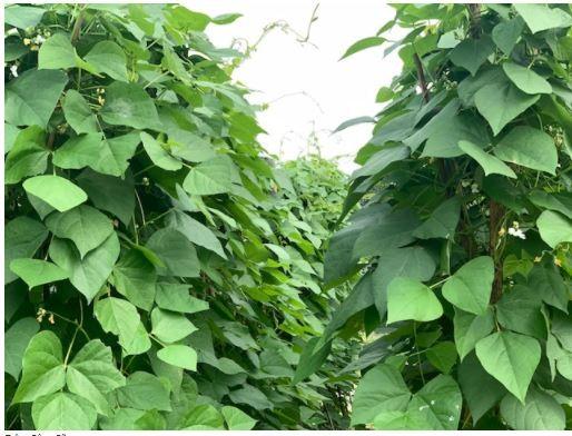 Đi thăm vườn xuân với muôn loài rau lại nhớ ngoại - ảnh 2
