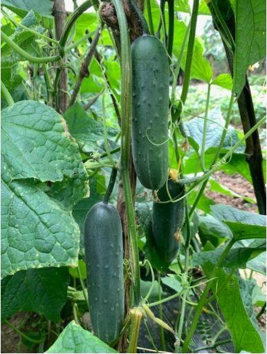 Đi thăm vườn xuân với muôn loài rau lại nhớ ngoại - ảnh 4