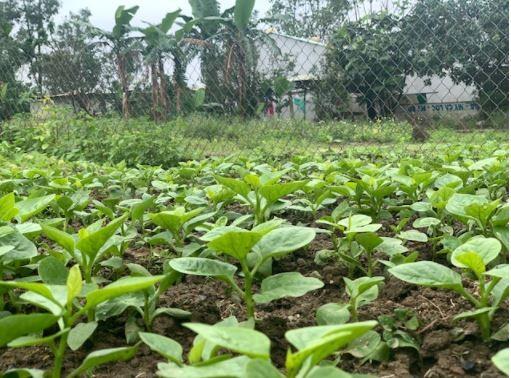 Đi thăm vườn xuân với muôn loài rau lại nhớ ngoại - ảnh 8