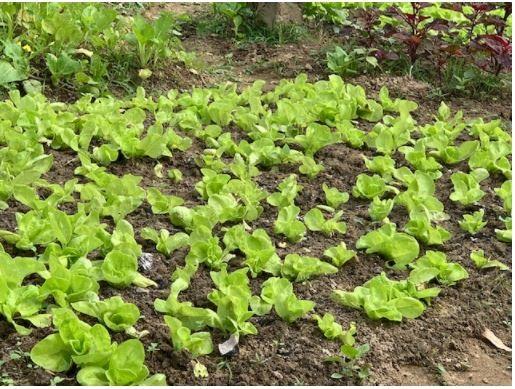 Đi thăm vườn xuân với muôn loài rau lại nhớ ngoại - ảnh 10