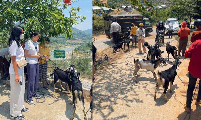 Kỳ Duyên, Minh Triệu tặng dê giống cho bà con ở Quảng Nam - ảnh 2
