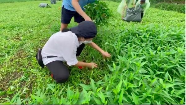 Sao Việt chung tay giúp đỡ người dân, ý bác sĩ chống dịch - ảnh 1