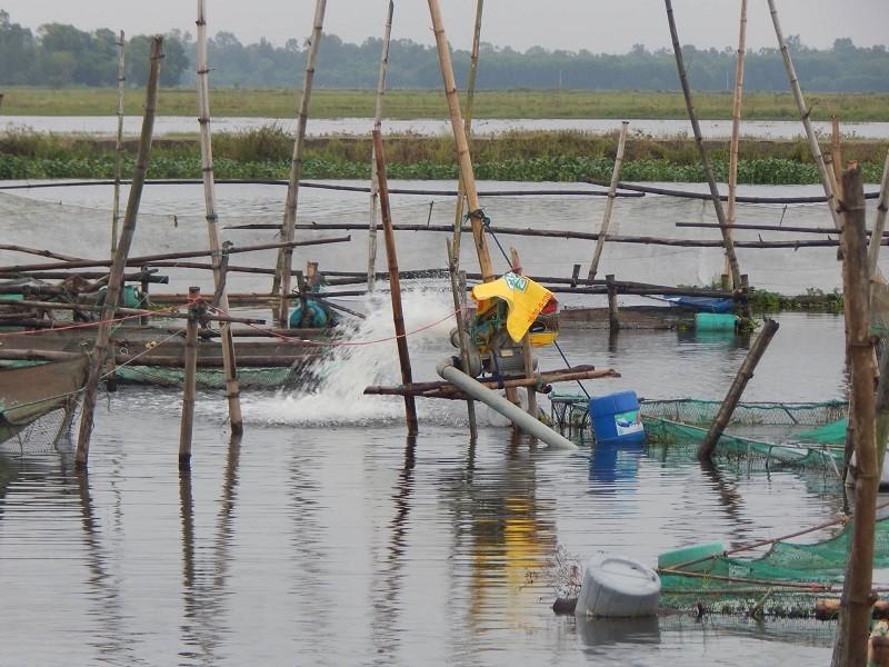 Hơn 37 tấn cá nuôi lăn ra chết trên sông Đại Giang - ảnh 2