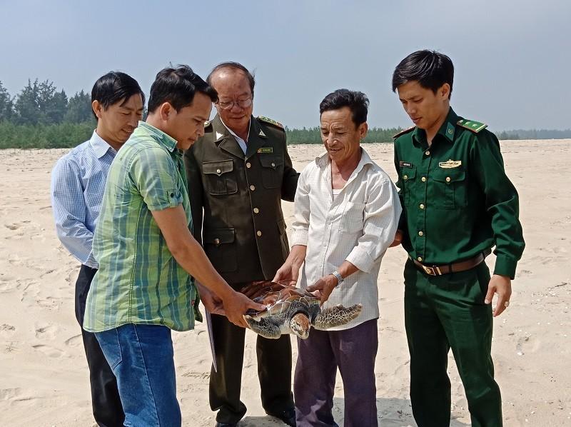 Chú rùa biển nặng 8 kg lạc vào phá Tam Giang - ảnh 1