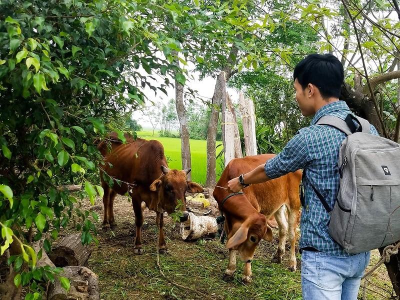 Vụ 'xẻ thịt' bò chính sách: Ủy ban kiểm tra vào cuộc  - ảnh 1