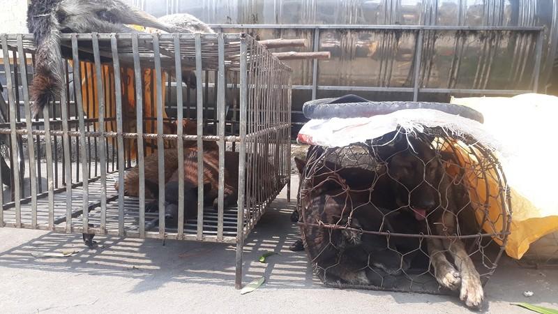 Đáng đời 4 'cẩu tặc' bị tóm gọn khi đang rao bán chó  - ảnh 2