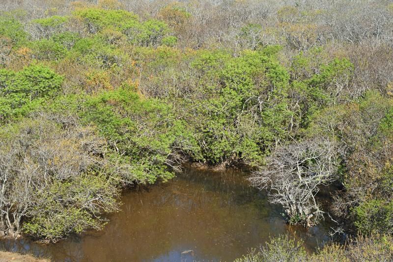 Hút hồn trước vẻ đẹp của rừng ngập mặn xứ Huế mùa thu - ảnh 6