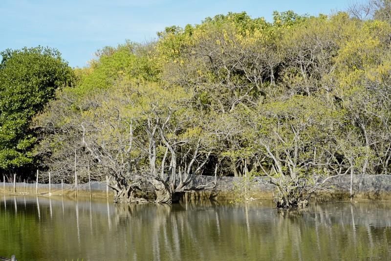 Hút hồn trước vẻ đẹp của rừng ngập mặn xứ Huế mùa thu - ảnh 3