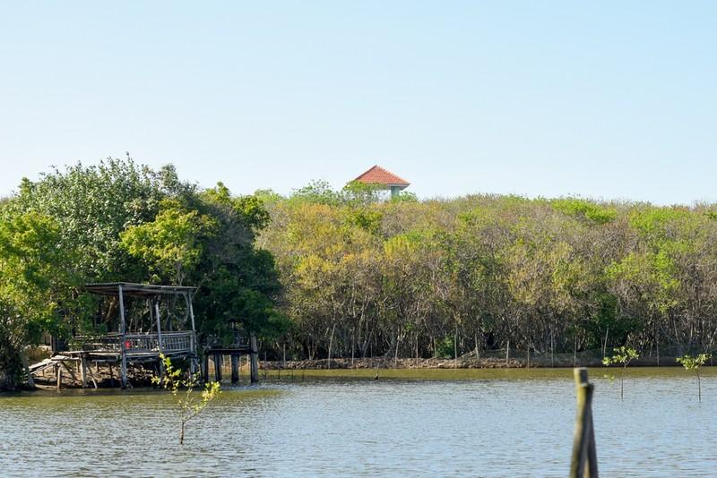 Hút hồn trước vẻ đẹp của rừng ngập mặn xứ Huế mùa thu - ảnh 5