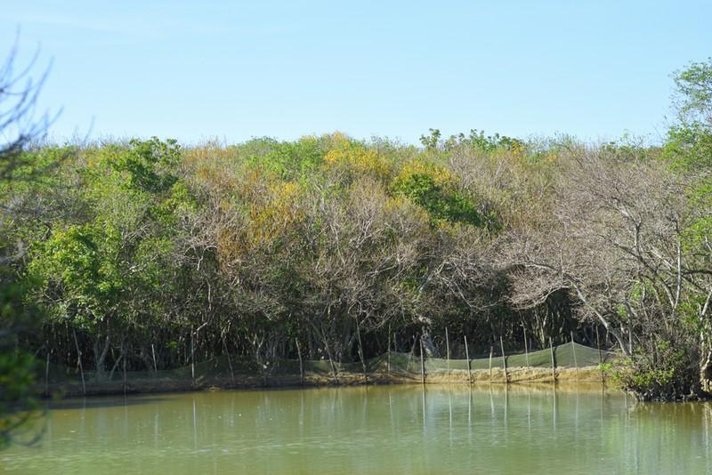 Hút hồn trước vẻ đẹp của rừng ngập mặn xứ Huế mùa thu - ảnh 10