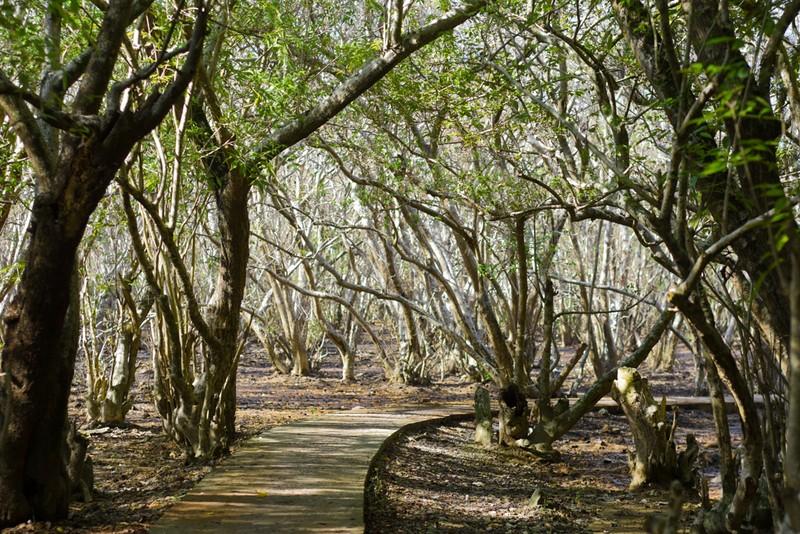 Hút hồn trước vẻ đẹp của rừng ngập mặn xứ Huế mùa thu - ảnh 9
