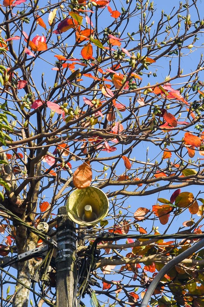 Xứ Huế đẹp nao lòng mùa cây bàng lá đỏ - ảnh 8